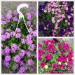 Assortment of hanging baskets
